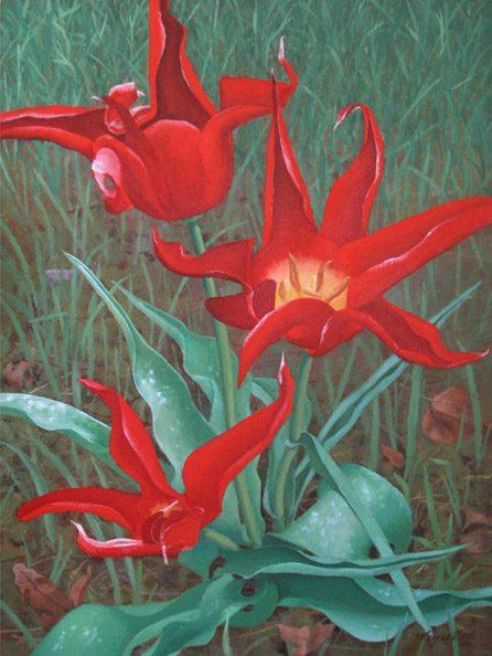ET Tulip